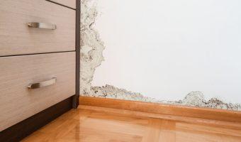 טיפול בעובש בקירות - איך עושים זאת אחת ולתמיד?