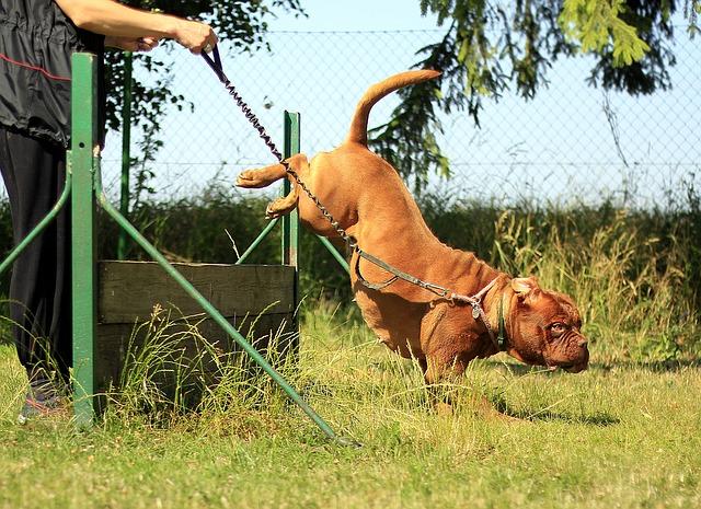 מה אתם צריכים לדעת על גידול כלבים